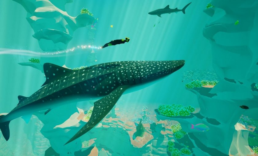 The diver swimming with a whale shark